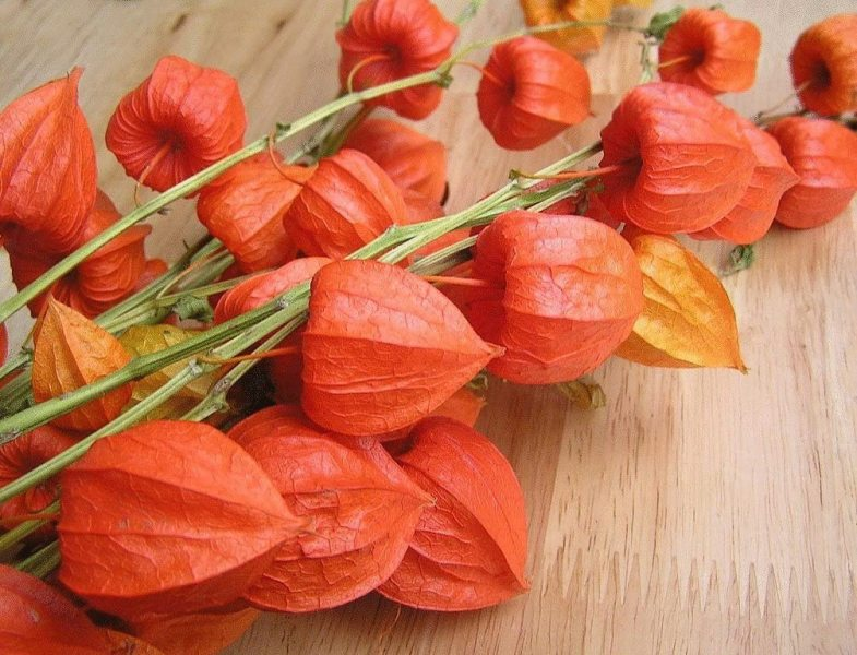 Photo from https://www.amazon.com/Physalis-alkekengi-Franchetti-lanterns-Ukraine/dp/B01LYWPJQP